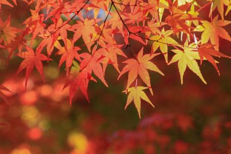 関東 紅葉
