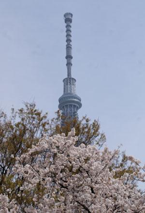 隅田公園 花見